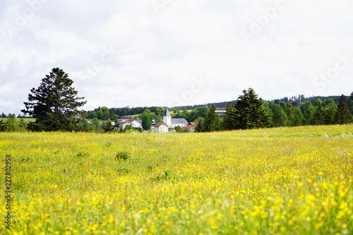 Papiers peints Jaune Village typique en France au millieu de sapins situés à l'arrière plan d'un champ de fleurs à dominaites jaunes et vertes