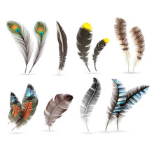 Realistic Bird Feathers. Detailed Colorful Feather Of Different Birds. 3d Vector Collection Isolated On White Background. Illustration Of Feather Bird Multicolored Collection