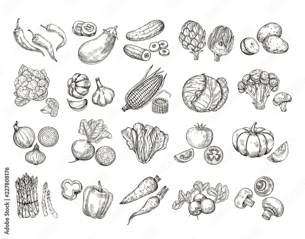 Fototapety, obrazy: Sketch vegetables. Vintage hand drawn garden vegetable collection. Carrots broccoli potato salad mushroom farming vector set. Salad and carrot, sketch mushroom illustration