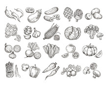 Sketch Vegetables. Vintage Han...