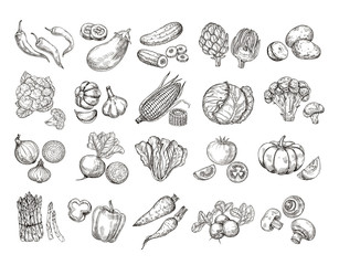 Sketch vegetables. Vintage hand drawn garden vegetable collection. Carrots broccoli potato salad mushroom farming vector set. Salad and carrot, sketch mushroom illustration