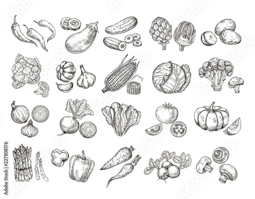 Cadres-photo bureau Cuisine Sketch vegetables. Vintage hand drawn garden vegetable collection. Carrots broccoli potato salad mushroom farming vector set. Salad and carrot, sketch mushroom illustration