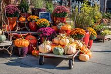Pumpkins And Chrysanthems Fall Display At Garden Center