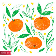 Hand Drawn Set Of Orange Fruit With Texture. Food Element Collection. Vector Illustration Of Tangerines With Leaves, Branches And Seeds. Floral Vector Elements For Design.