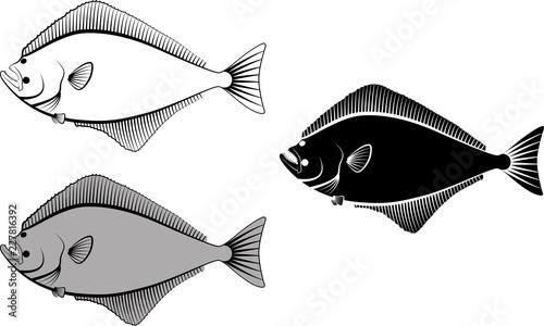 Fototapeta halibut