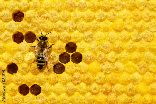 Bee on a cell with larvae. Bees Broods. Concept of beekeeping.