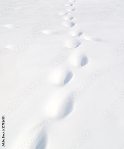 Spoed Foto op Canvas Antarctica footprints in the snow