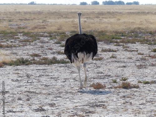 Photo Strauss Namibia