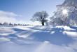 canvas print picture - Verschneite Winterlandschaft an einem sonnigen Tag im Schwarzwald / Snowy winter landscape on a sunny day in the Black Forest