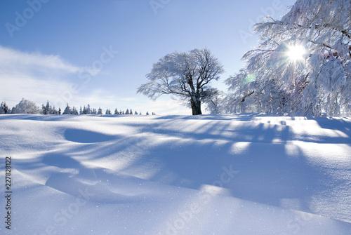 Obraz na plátně Verschneite Winterlandschaft an einem sonnigen Tag im Schwarzwald / Snowy winter