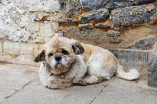 Little Dog Lying Near The Wall Of The House On Lhasa Street