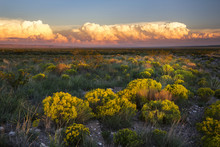 The Desert Comes To Life With Evening Light In New Mexico