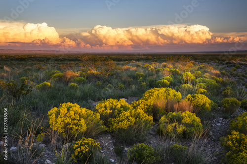 Spoed Foto op Canvas Grijze traf. The Desert comes to life with evening light in New Mexico