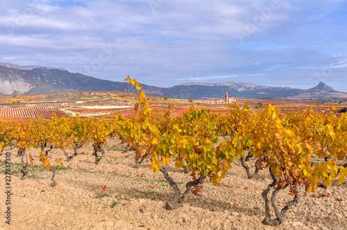 Viñedos en otoño con Elvillar al fondo, Rioja Alavesa, España