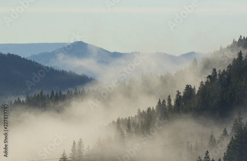 Poster Morning with fog Larch trees are the star of the alpine forest in Washington State