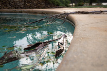Debris In Pool After Hurricane...