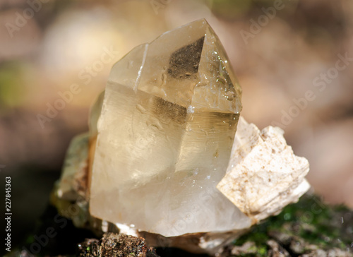 Photo  Cathedral citrine quartz point from Brazil nestled in matrix on moss, bryophyta and bark, rhytidome in forest preserve