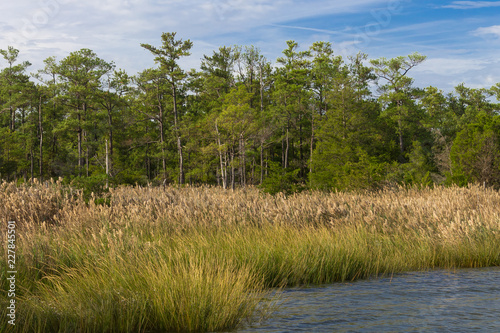 The wetlands of southern Maryland along the Chesapeake Bay Wallpaper Mural