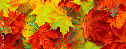 Foto auf Leinwand Rot Beautiful Nature autumn Background with fallen maple leaves