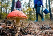 Fly Agaric In The Deep Autumn Forest
