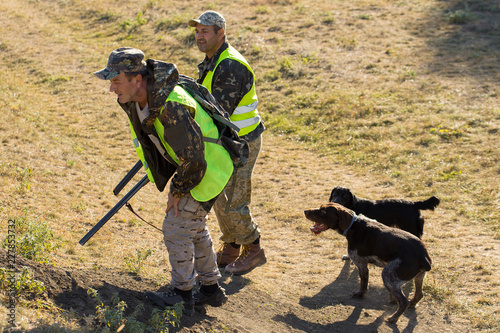 Poster Chasse Hunters with a german drathaar and spaniel, pigeon hunting with dogs in reflective vests