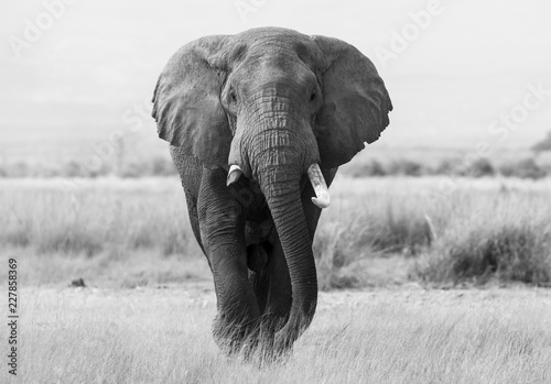 Foto op Plexiglas Olifant The elephant profile