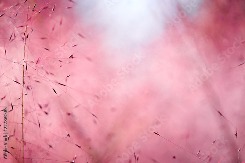 Foto op Canvas Candy roze Pink Muhly Grass Background