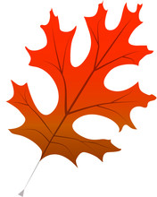 Fall Red Oak Leaf