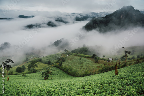 Staande foto Olijf Foggy morning at Tea Plantation and mountain landscape in Thailand, beautiful landscape and sea of fog in Thailand.