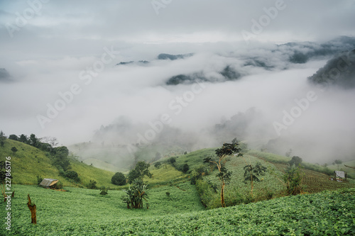 Foggy morning at Tea Plantation and mountain landscape in Thailand, beautiful landscape and sea of fog in Thailand.