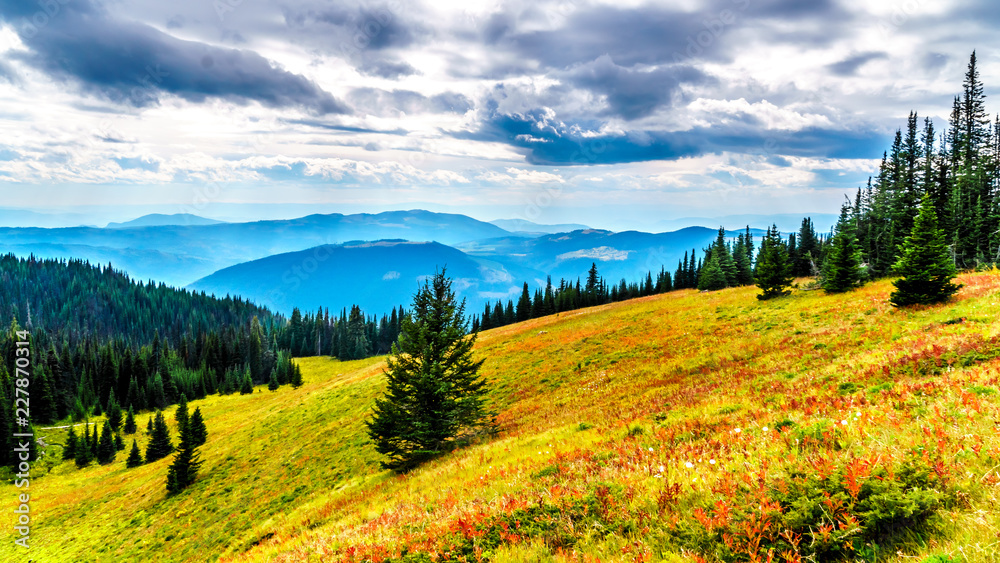 Fototapety, obrazy: Hiking through the alpine meadows in fall colors on Tod Mountain near the village of Sun Peaks in the Shuswap Highlands of British Columbia, Canada