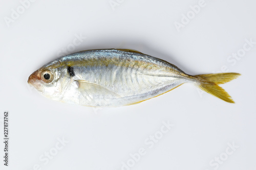 Raw fresh small yellow striped tervally banded slender fish Fototapeta