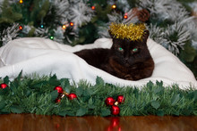 A Black Cat Wearing A Crown Of Golden Christmas Tinsel Is Sitting On A White Cushion In Front Of A Christmas Tree.