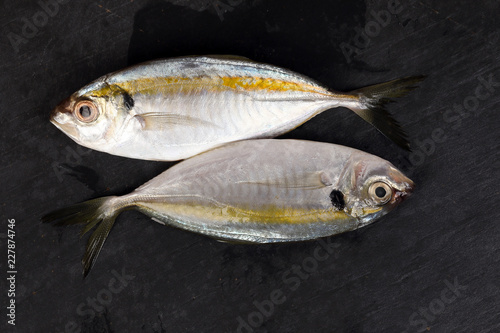 Raw fresh small yellow striped tervally banded slender fish Slika na platnu