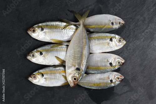 Fotografija  Raw fresh small yellow striped tervally banded slender fish