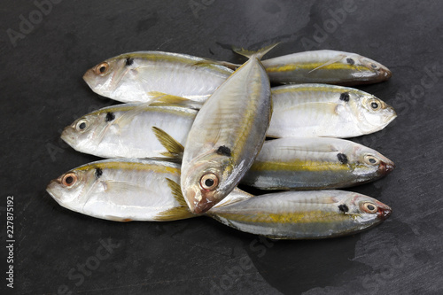 Fényképezés  Raw fresh small yellow striped tervally banded slender fish