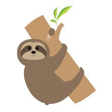 Sloth Hugs Tree Branch. Cute C...