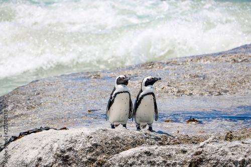 Poster Pinguin ペンギン