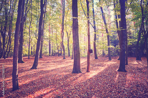 Scenic forest view with deep shadows at sunrise, color toning applied.