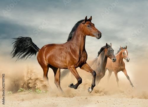 Obraz Herd of wild beautiful horses - fototapety do salonu