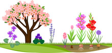 Garden With Flowering Tree And Different Blooming Plants