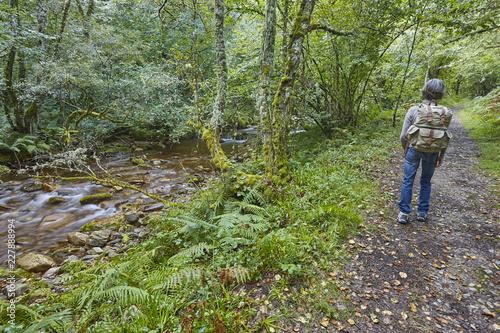 Forest pathway in Muniellos biosphere reserve, Asturias. Spain