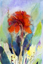 Watercolor Landscape Painting On Paper Colorful Of Canna Lily Flower