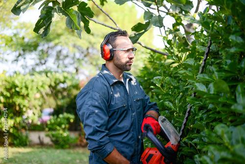 Fotomural handsome young man gardener trimming hedgerow in a garden park outdoor