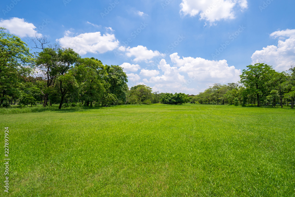 Fototapety, obrazy: Grass and green trees in beautiful park under the blue sky