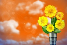 Beautiful Live Coreopsis Bouquet Bouquet In Modern Metal Vase With Blank Place For Your Text On Left On Cloudy Sky Bokeh Background.