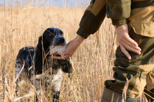 Leinwand Poster Successful hunt, female hunting dog and wounded bird are in a thickets of a high grass