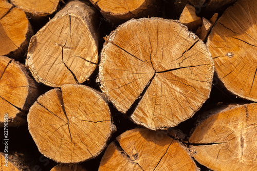 In de dag Brandhout textuur Dry oak firewood stacked in a pile, not chopped whole wood for winter heating fireplace. Natural wood background.
