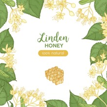 Square Banner Template Decorated With Honeycomb And Frame Or Border Made Of Linden Flowers, Leaves. Colorful Hand Drawn Vector Illustration In Elegant Realistic Style For Honey Product Advertisement.