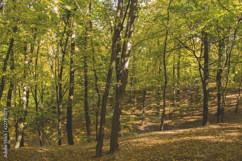 Garden Poster Birch Grove Sunny autumn landscape at autumn.